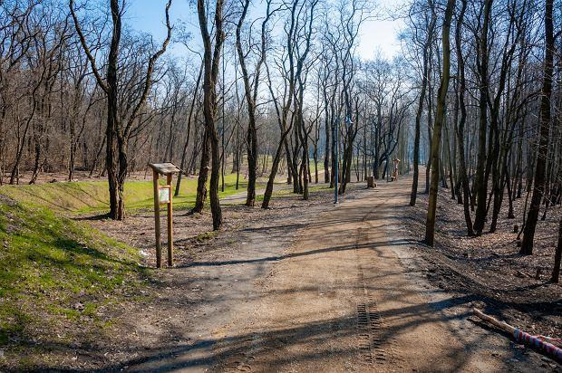 Zdjęcie numer 14 w galerii - Park Tysiąclecia w Sosnowcu w trakcie rewitalizacji.