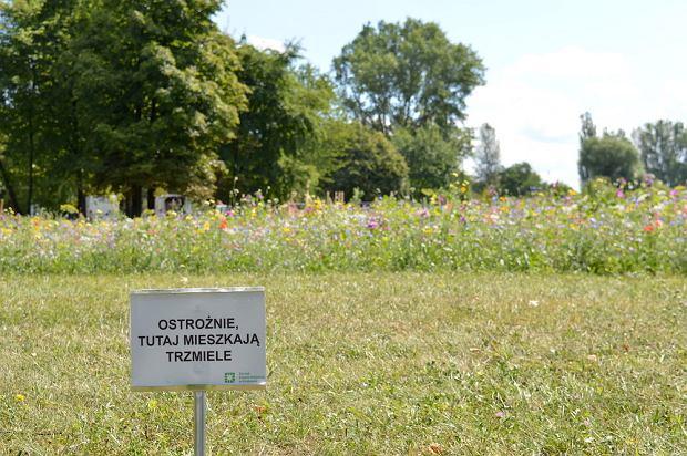 Krakowskie łąki kwietne