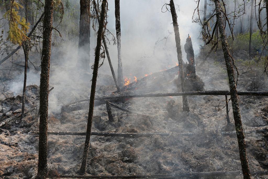 Syberia. Pożary lasów