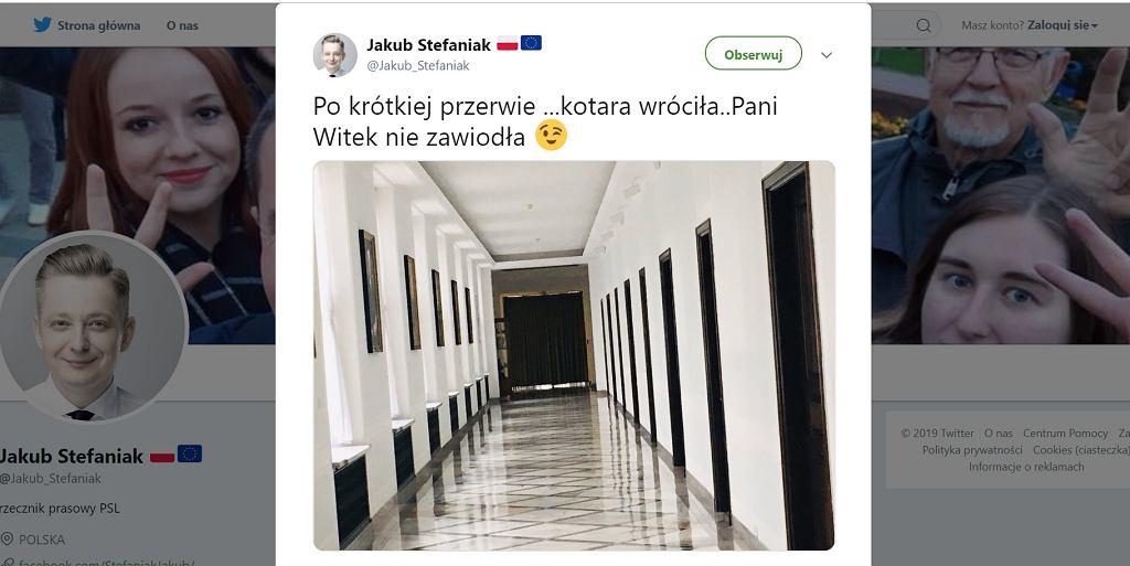 Kotary wróciły na korytarze Sejmu.