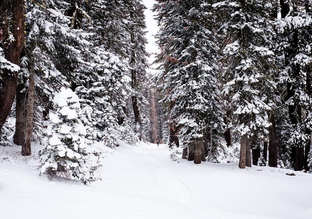 Synoptycy IMGW o 'bestii ze Wschodu': Od czwartku dużo śniegu