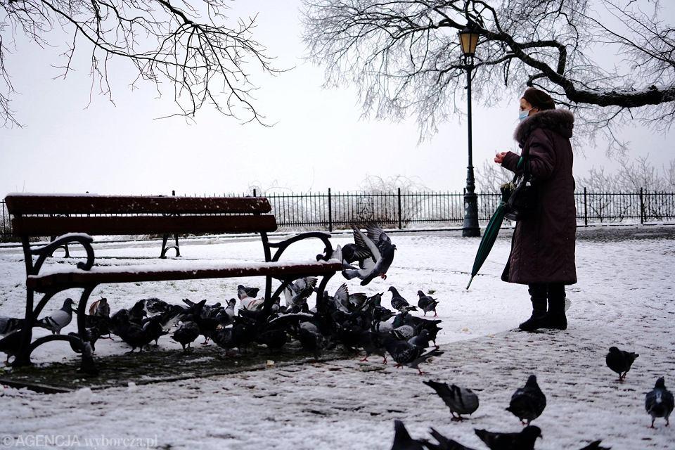 Zima w Płocku