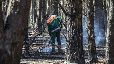 Las po pożarze na Fordonie w Bydgoszczy