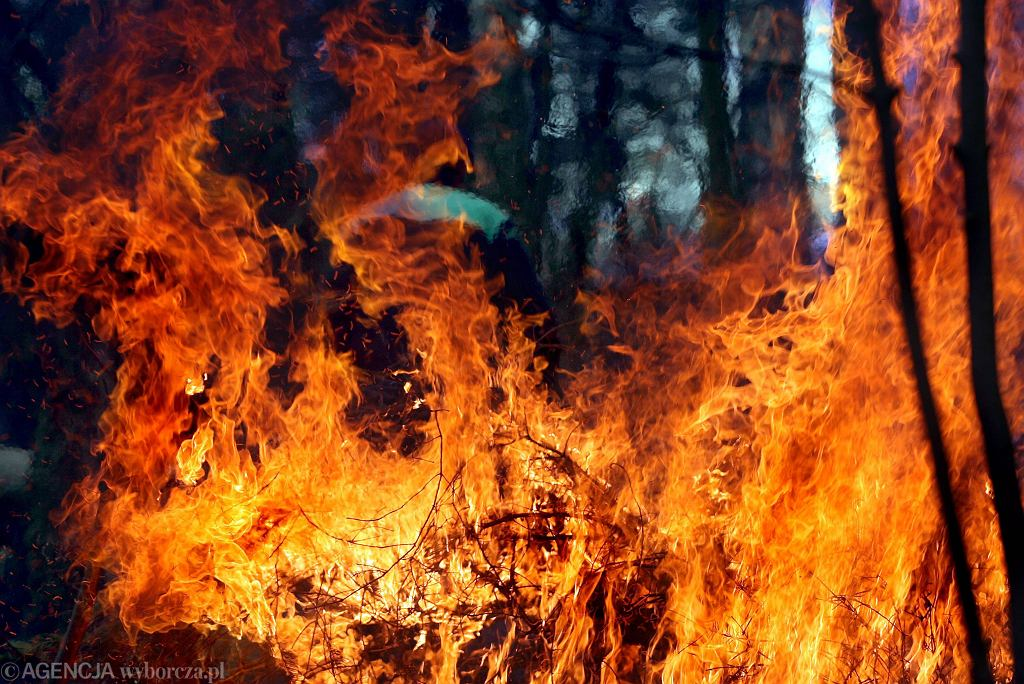 Pożar lasu / Zdjęcie ilustracyjne