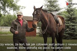 Wakacyjny program naukowy. Czy wiesz, że koń poci się na całym ciele?