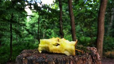Nie zostawiaj śmieci organicznych w lesie. Apelują leśnicy