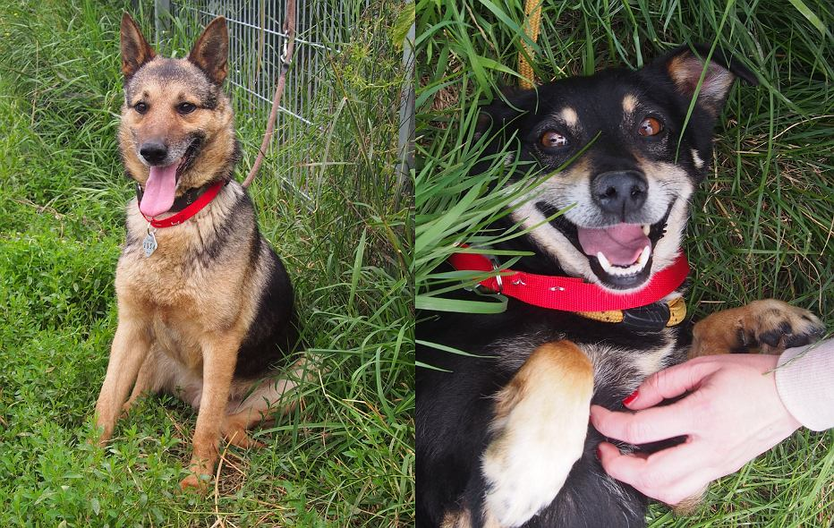 Psy ze schroniska dla zwierząt w Radysach szukają nowego domu