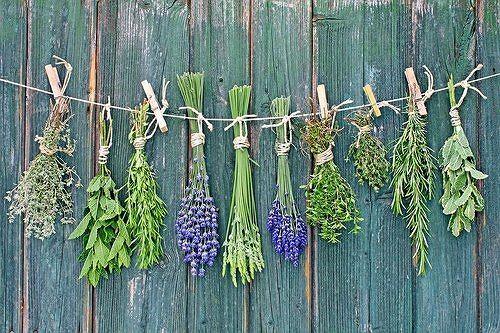 Niektóre zioła doskonale wspierają odporność naszego organizmu.