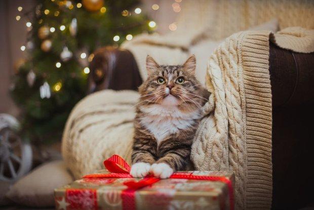 Wigilijna kiełbasa i pieniek, który... Tak się obchodzi Wigilię i Święta w różnych miejscach na świecie
