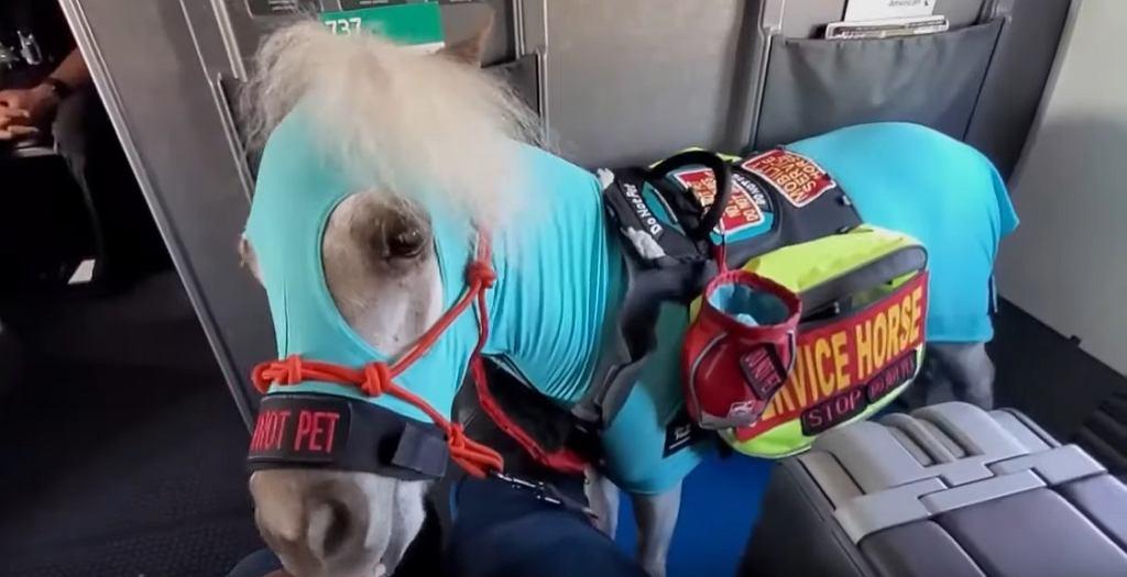 Koń leciał pierwszą klasą. Pasażerka zabrała go jako wsparcie