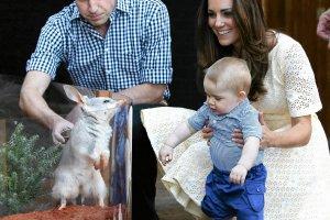Książę William i księżna Kate są w trakcie oficjalnej wizyty w Australii i Nowej Zelandii. Wraz z 8-miesięcznym synkiem Jerzym odwiedzili zoo w Sydney, gdzie mały książę odwiedził zagrodę wielkouchów króliczych. Jeden z nich - na jego cześć - zostanie nazwany jego imieniem. - Podejrzewam, że 'wielkouch' (ang.  'bilby') będzie pierwszym słowem Jerzego, 'koala' jest trudniejsze do wymówienia. Bardzo cieszymy się z naszego pobytu w Australii - powiedział książę William po przybyciu do Sydney