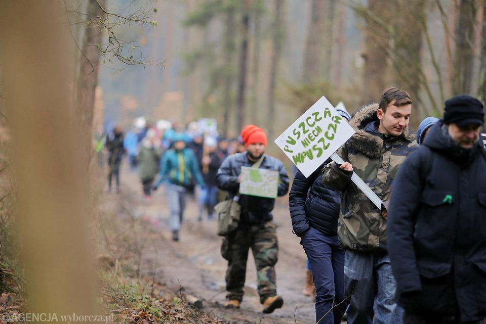 Spacer w Puszczy Białowieskiej