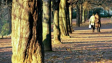 Z danych UM w Katowicach wynika, że już prawie jedna czwarta mieszkańców to emeryci