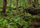 Narty w lesie w środku lata. Naprawdę. [WIDEO]