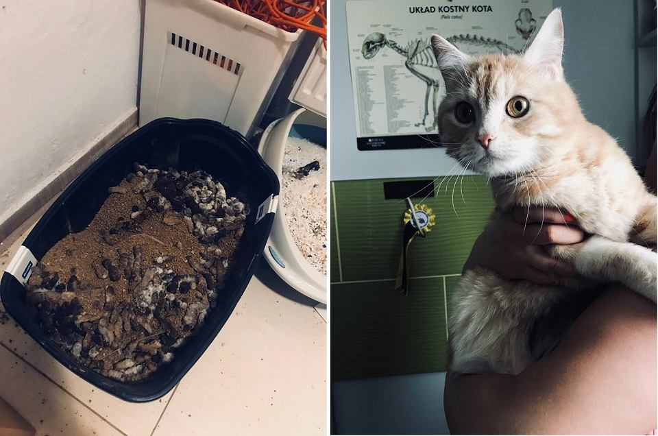W mieszkaniu w Ścięgnach koło Karpacza znajdował się pies i dwa koty