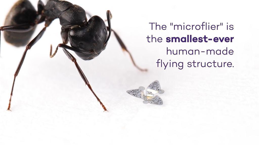 Powstał najmniejszy na świecie 'latający' mikrochip. Ma zbierać dane na temat zanieczyszczeń i wirusów