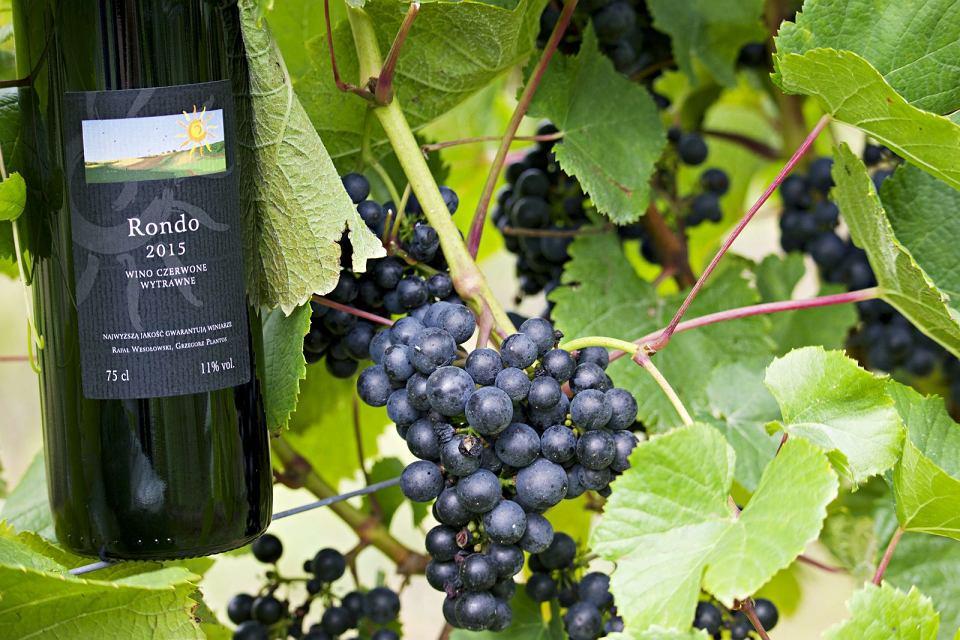Zdjęcie numer 7 w galerii - Dobre polskie wina naprawdę istnieją, choć budzą kontrowersje. Głównie ze względu na cenę