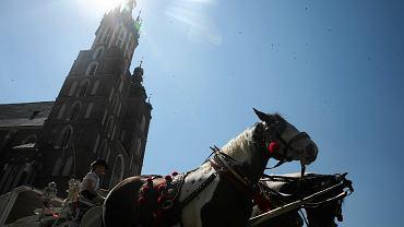 Kraków zamknął postój dla dorożek na Rynku Głównym. Konie nie mogą stać na słońcu