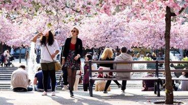 Wiosna w Sztokholmie
