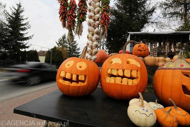 Zdjęcie numer 0 w galerii - Dyniowe żniwa  - sezon na Halloween w podwarszawskiej Lesznowoli
