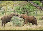 Afryka. Tanzania - moje wielkie afrykańskie marzenie, czyli wszystko, co trzeba wiedzieć o safari w Tanzanii