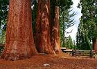 Parki narodowe USA. Sequoia & Kings Canyon National Park