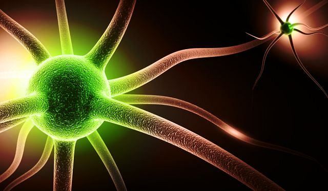 Choroba Krabbego jest śmiertelną chorobą genetyczną obwodowego układu nerwowego