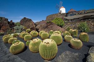 Tanie latanie: Wyspy Kanaryjskie, czyli wakacje na Lanzarote za mniej niż 300 złotych