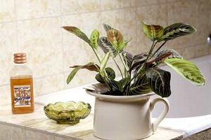 Rośliny doniczkowe do łazienki