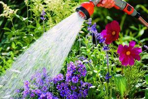 Podlewanie trawnika - Nie taka straszna susza...
