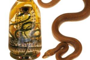 Ze śliny, węża i robaków - dziwne alkohole