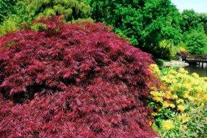Drzewa i krzewy w odcieniach czerwieni