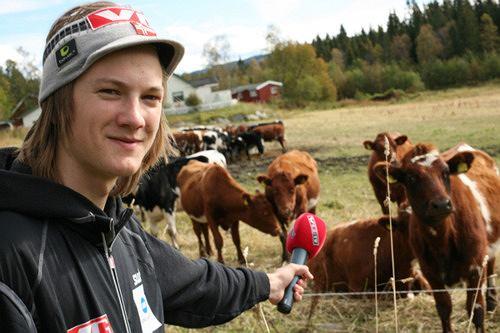 Tom Hilde rozmawia z krowami
