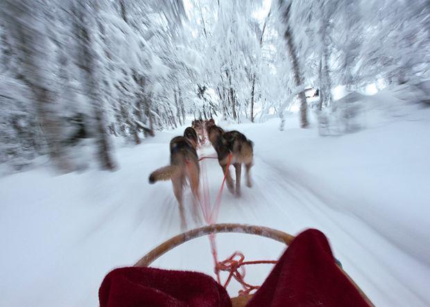 Polar Speed Retket Ky - szkolenie w poworzeniu psimi zaprzęgami