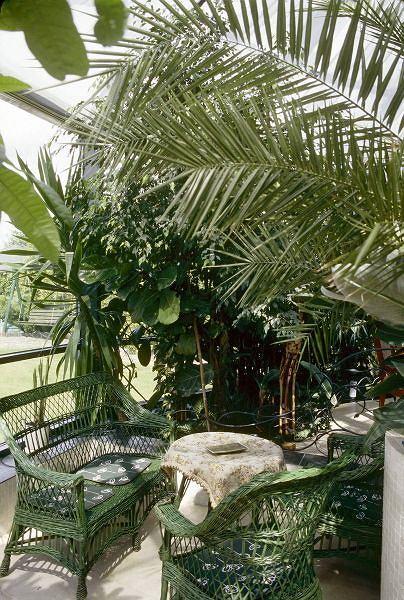Ochrona ogrodu, oranżerii i domu przed pająkami