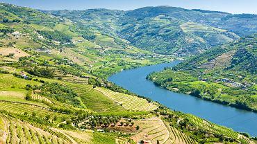 dolina rzeki douro, douro, portugalia, wino, winnice
