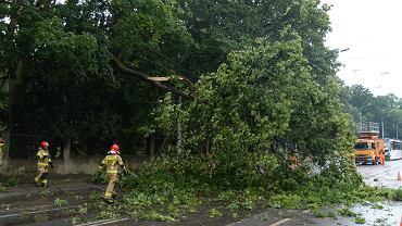 Drzewo połamane na skutek nawałnicy (zdjęcie ilustracyjne)