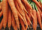 Marchew kalorie, pochodzenie, właściwości. Dlaczego warto jeść marchewkę?