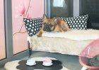 Dog Inn - gdzie oddać psa na wakacje