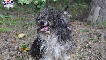 Pies porzucony w lesie