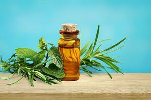 Olejek z drzewa herbacianego: właściwości zdrowotne