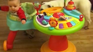 Pies zapewnia dziecku masę zabawy.