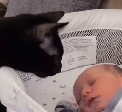 Ten kot nie mógł się powstrzymać przed dotknięciem dziecka.