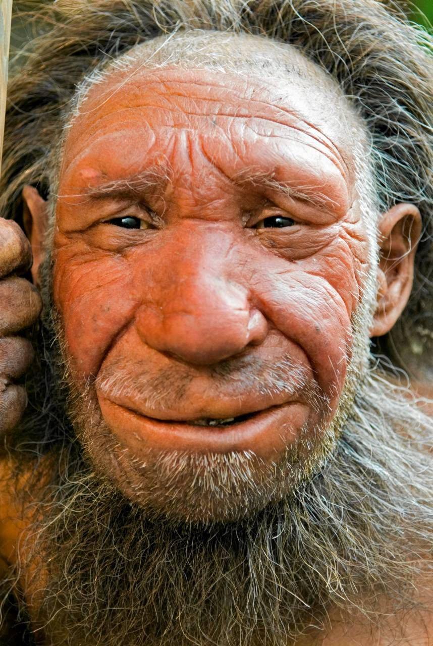 Zdjęcie numer 4 w galerii - Neandertalczycy wymarli, bo nie umieli gotować?