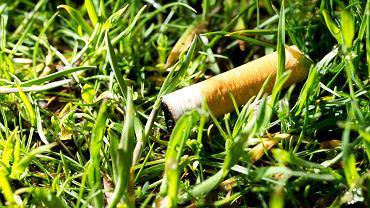 Niedopałek w trawie