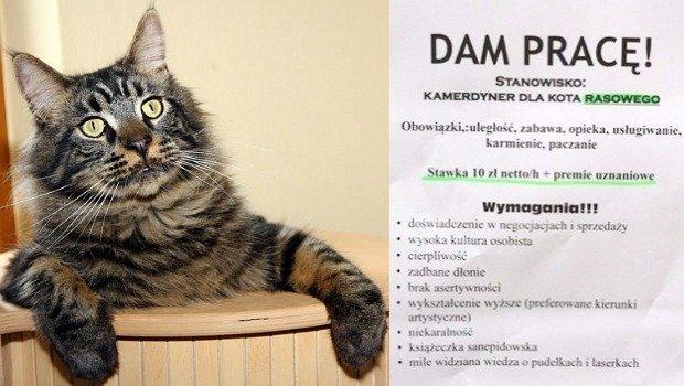 Kot czeka na swojego kamedrynera