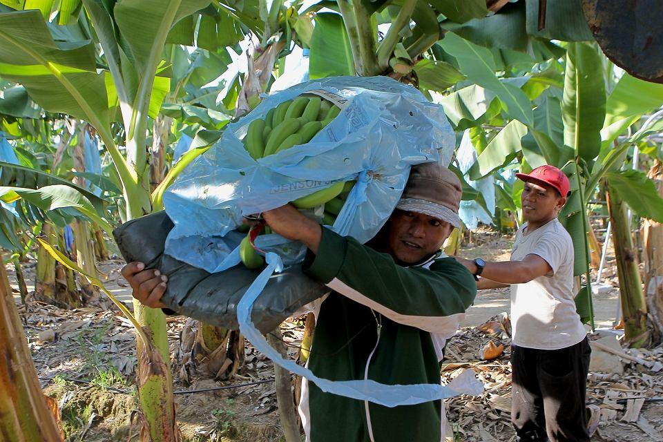 Plantacja bananów na Filipinach