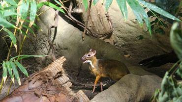 Linda w warszawskim zoo