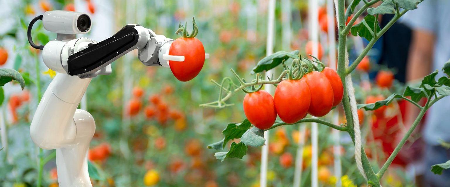 Za kilkanaście lat produkcja żywności będzie miała zupełnie inne oblicze (fot. Sutterstock)