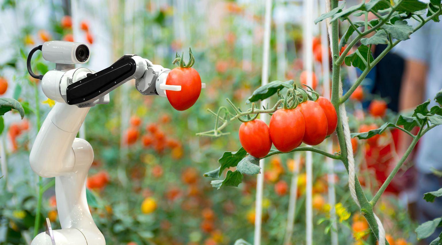 Za kilkanaście lat produkcja żywności będzie miała zupełnie inne oblicze